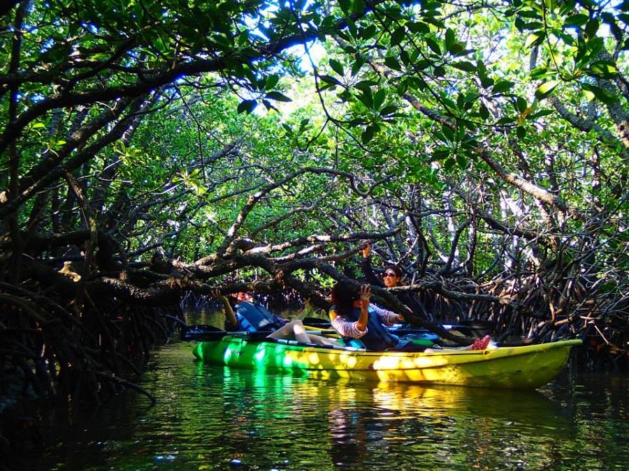 mangro